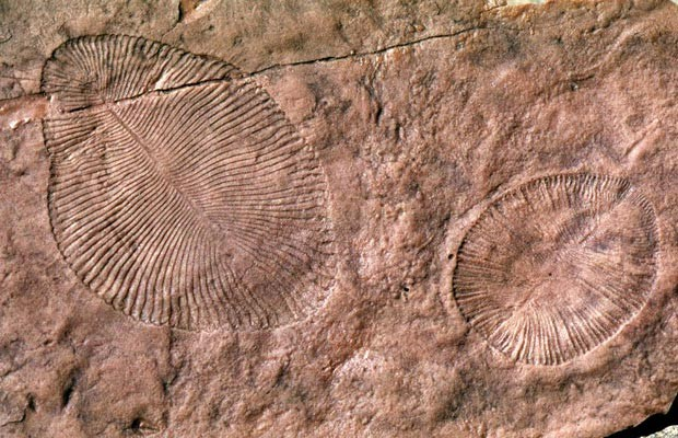 Fósseis ediacaranos foram encontrados na Austrália em 1946 (Foto: G. Retallack/Divulgação)