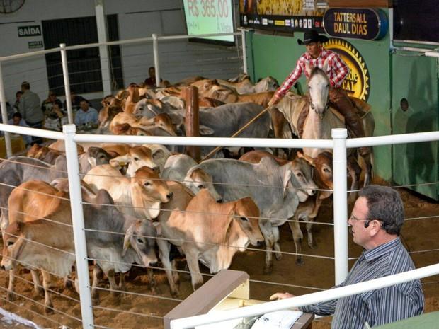 Vão ser realizados dez leilões na 42ª Expomontes (Foto: Solon Queiroz)