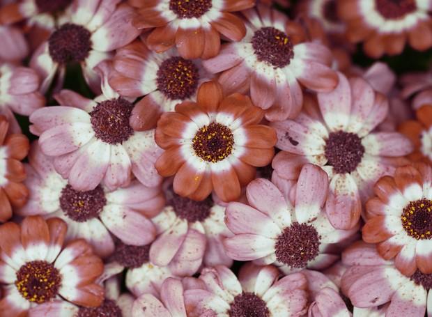 carola-becker-fotografa-plantas-e-folhas (Foto: Reprodução/Carola Becker/Sepia Fotografie)