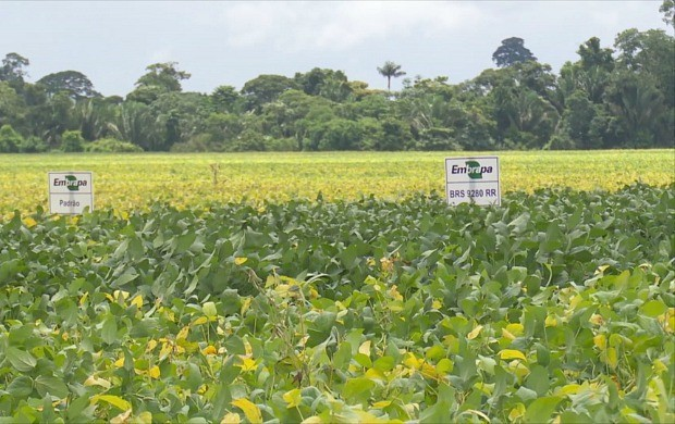 Cultivo de soja aumentou mais de 70% na regiçao do Vale do Jamari, em Rondônia (Foto: Bom Dia Amazônia)