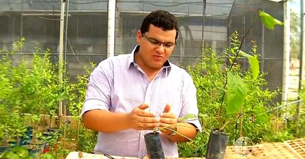Roseano Medeiros, que é doutorando em agronomia, explica que a técnica consiste na união de duas plantas da mesma espécie (Foto: Reprodução/Inter TV Cabugi)