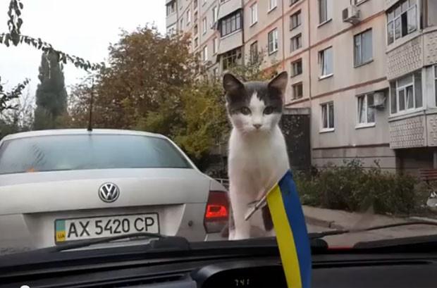 Gato curioso se assusta com movimento de limpador de para-brisa (Foto: Reprodução/YouTube/Catss Vidoz)