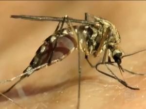 Doença é transmitida por picada de mosquito (Foto: Reprodução/ TV Globo)