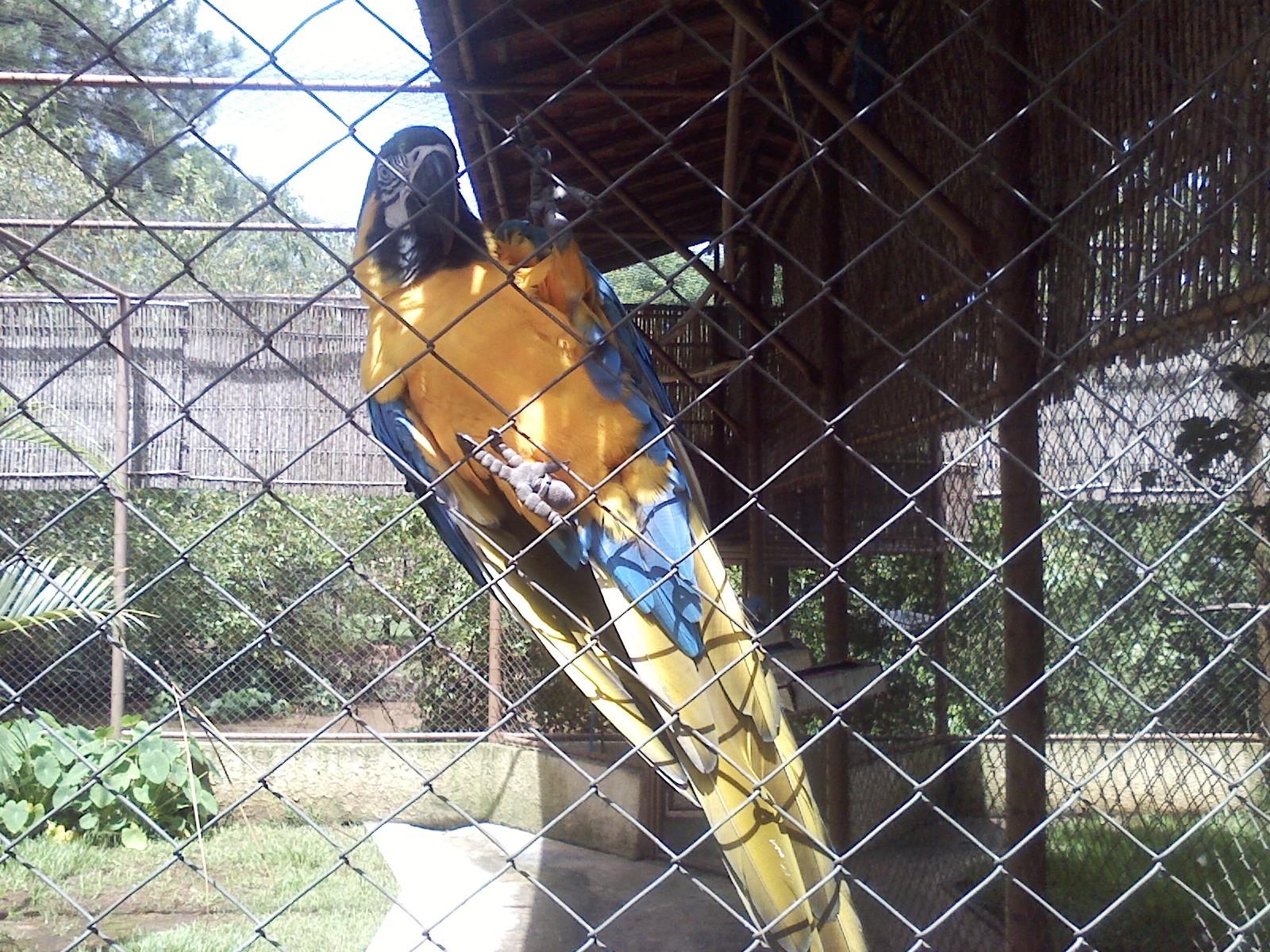 Mais de 100 espécies de aves estão catalogadas no parque. (Foto: Carlos Alberto Soares / TV Tem)