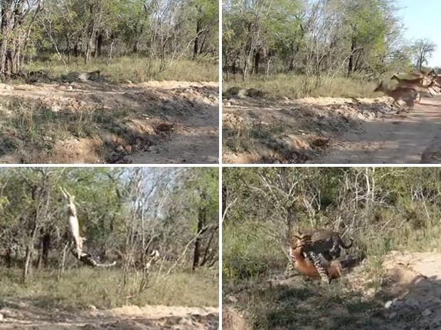 Leopardo conseguiu agarrar antílope em pleno ar. (Foto: Reprodução)