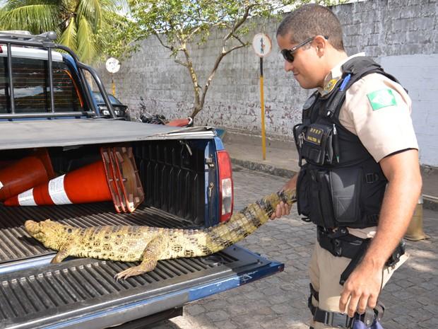 PRF da Paraíba encaminhou o jacaré para o Ibama (Foto: Walter Paparazzo/G1)