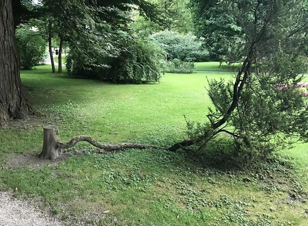Esta árvore simplesmente se recusa a morrer (Foto: Reprodução)