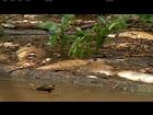 Moradores encontram cerca de meia tonelada de peixes mortos em rio
