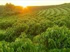 Mesmo com safra menor, crescem as exportações de café em 2014