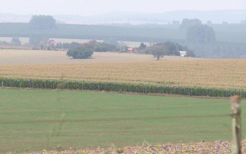 Aeronave fez pouso em milharal da propriedade rural (Foto: Reprodução/ TV TEM)