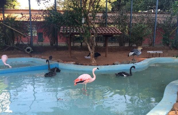Zoológico de Goiânia é uma das opções mais tradicionais de lazer da população (Foto: Vitor Santana/G1)