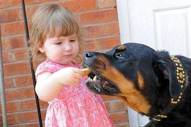 A rottweiler Missy recebe biscoito de Kayla, de 2 anos, neta da dona de casa que quase foi invadida (Foto: Caters)
