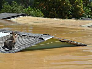 Em imagem da terça-feira (24), gato fica preso em telhado de casa totalmente submersa pela cheia do Rio Acre em Brasiléia (Foto: Caio Fulgêncio/G1)