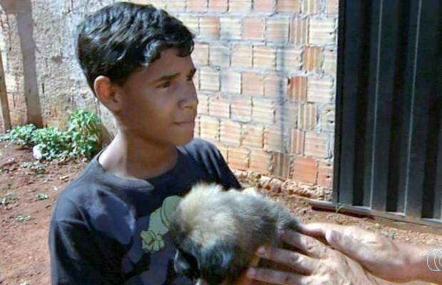 Garoto salvo de raio por cachorro que morreu ganha outro animal: 'Adorei' em Goiás (Foto: Reprodução/TV Anhanguera)