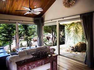 Hotel na Austrália permite que hóspedes fiquem muito próximos de leões, ursos e girafas