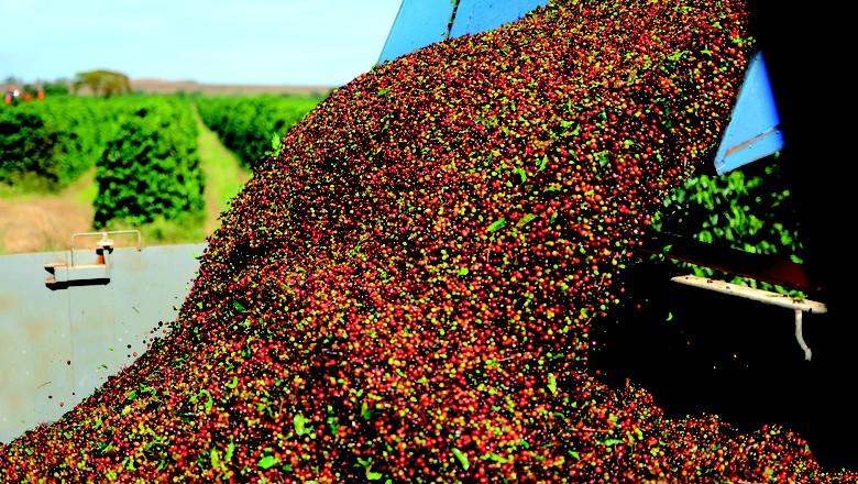 Os trabalhos estão adiantados em comparação com a mesma época do ano passado, quando a colheita atingia 68,39% (Foto: Márcio Oliveira/DNA Photo & Vídeo)
