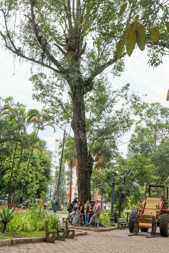 Grupo se amarrou neste eucalipto na manhã desta terça (Foto: Nova Friburgo Cidade das Árvores Assassinadas)