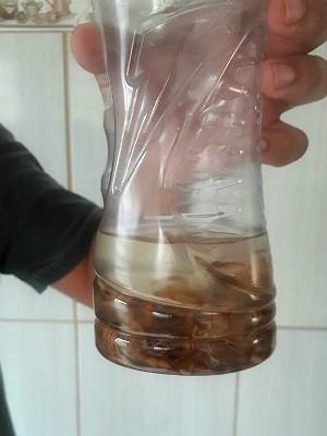 Vendedor captura animais e os mantém dentro de um pote com álcool (Foto: Rogério Picheco/Arquivo Pessoal)