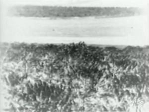 Geada queimou toda a plantação de café do Paraná em 1975 (Foto: Arquivo/RPC)