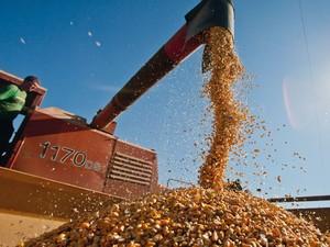 Chuvas retardaram plantio dos grãos de verão, como o de milho, no Rio Grande do Sul (Foto: Pedro Revillion/Palácio Piratini)