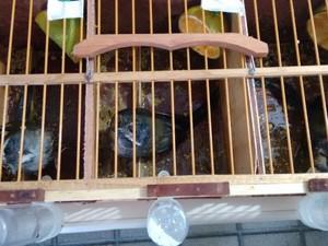 Aves apresentavam sinais de maus tratos (Foto: Divulgação/PRF)