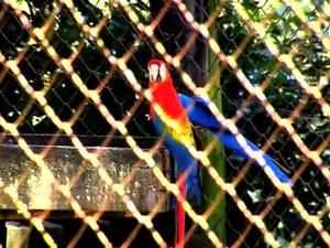 Arara no zoológico de Sapucaia do Sul na Região Metropolitana de Porto Alegre (Foto: Reprodução/RBS TV)