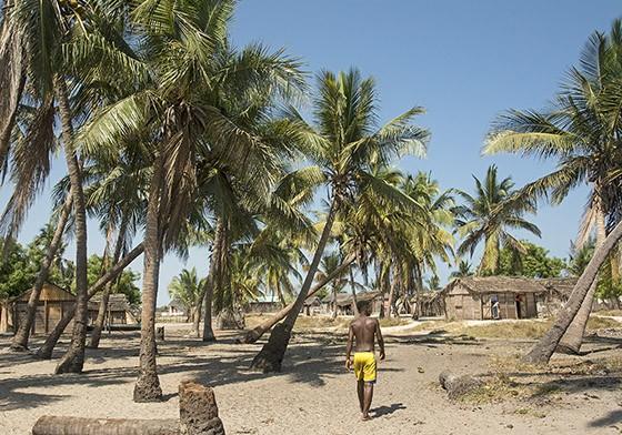 O vilarejo Betania sob a sombra de um amplo coqueiral. (Foto: © Haroldo Castro/Época)