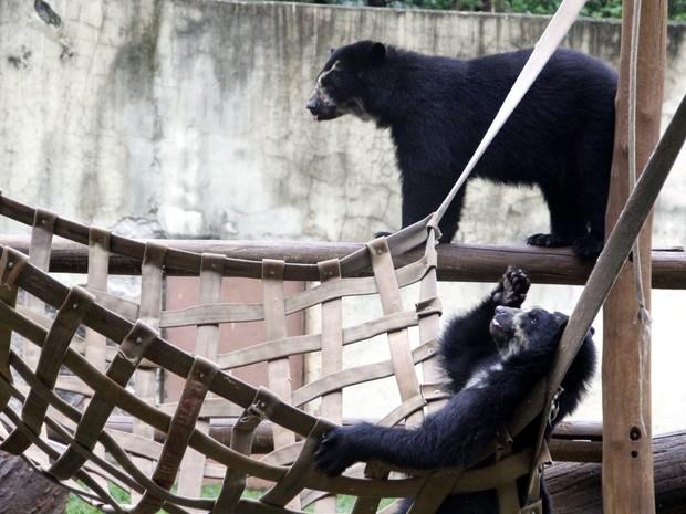 Filhotes de urso-de-óculos são uma das atrações do parque (Foto: Fabio Rodrigues/G1)