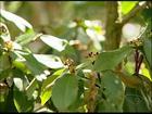 Reserva florestal no Norte do ES é pólo de pesquisa de novas espécies