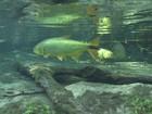 Diminuição de peixes é problema grave na região do Rio Paraguai