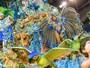 Desfile das Campeãs tem festa e críticas a jurados (Flavio Moraes/G1)