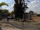 Mais de 800 árvores caíram em Goiânia desde o início do ano