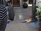 Lista reúne 'gato de ressaca' e mais animais flagrados na 'maior preguiça'
