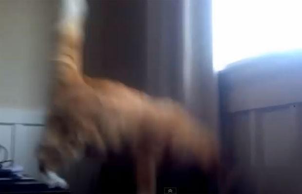 Vídeo faz sucesso ao mostrar gato errando salto (Foto: Reprodução/YouTube/Jake Groves)