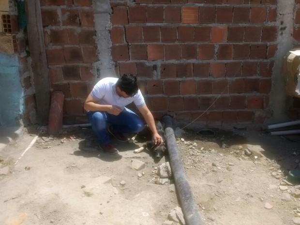 Animal foi encontrado em Caruaru em más condições, diz GPA (Foto: Divulgação/GPA)