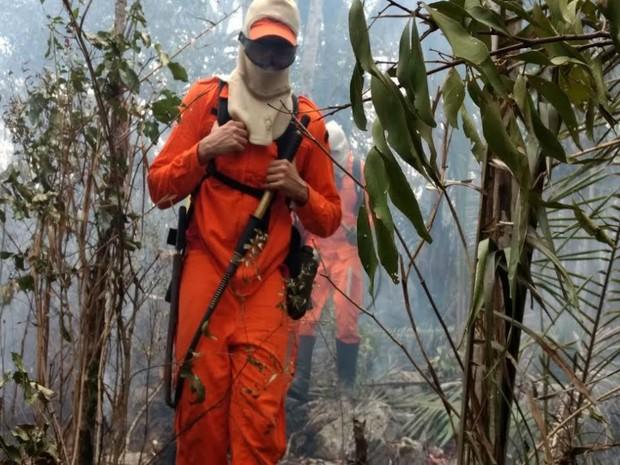 Incêndio atinge vegetação de serra em Saúde, no centro norte da Bahia (Foto: Divulgação/Sema)
