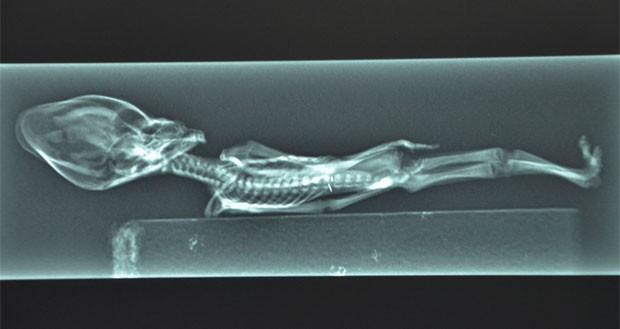 Radiografia do humanoide em cena do filme 'Sirius' (Foto: Divulgação/Sirius)