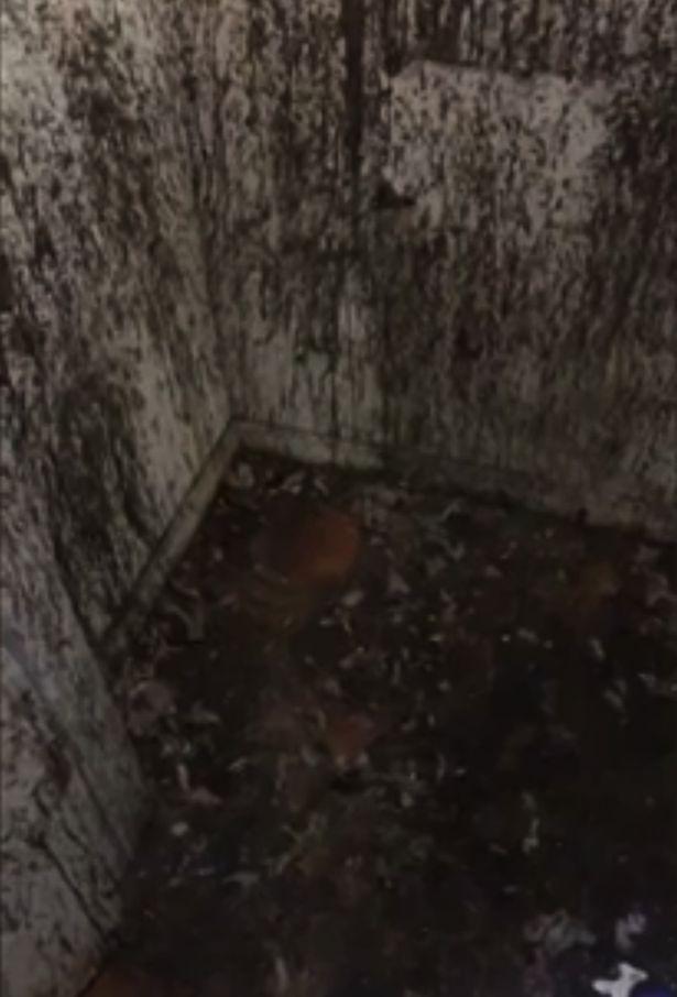 """Imagem do closet cheio de sangue e penas que Azealia Banks alega fazer """"bruxaria"""" (Foto: Reprodução/Instagram)"""