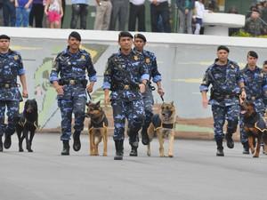 Cães do Canil da Guarda Municipal de São Vicente, SP (Foto: Arquivo/ PMSV)