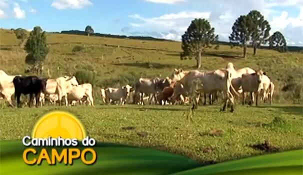 Caminhos do Campo tuberculose bovina (Foto: Reprodução/ RPC TV)