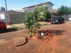 Moradores 'plantam' árvore para sinalizar buraco após acidente