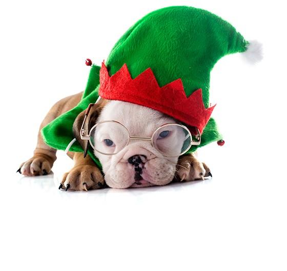 Pet no Natal (Foto: Thinkstockphotos)