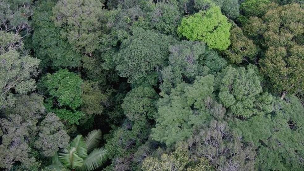 Base de dados será fundamental para conservar espécies, diz especialista (Foto: Kyle Dexter)