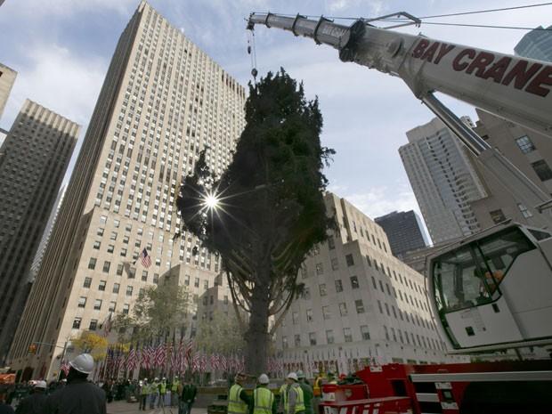 Árvore vai receber estrela de Swarovski e lâmpadas de LED (Foto: Richard Drew/AP)