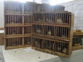 Aves foram apreendidas no Mercado do Cordeiro (Fot Divulgação / Cipoma)
