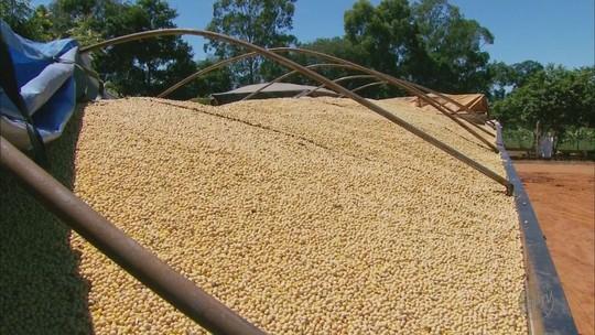 Problemas com balsas atrapalham escoamento de soja em Delfinópolis