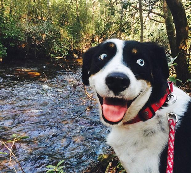 Cão com 'cara pura da felicidade' vira hit na web (Foto: Reprodução/Reddit/thisisMyLuck1)