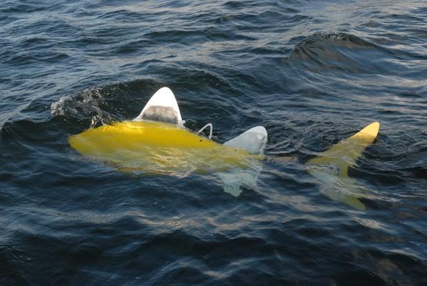 Peixe-robô criado pelo Shoal (Foto: SHOAL Technologies/Reuters)