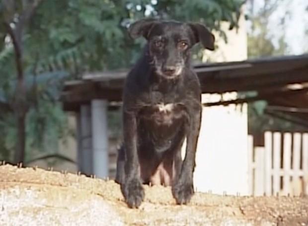 Mantenha o local onde seu cachorro vive limpo e bem cuidado (Foto: Reprodução / TV Tem)