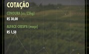 Arroba do boi gordo é cotada a R$ 141,67 na região